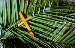 Cross palms